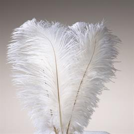 Ostrich feathers for all occasions