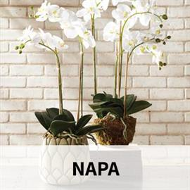 Napa Home & Garden brings the casually elegant lifestyle of the Napa Valley to style-conscious retailers and consumers, offering the very best in home, garden, holiday and floral.